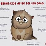 Benefícios de se ter um gato