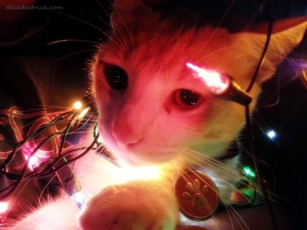 deiadietrich-cat2