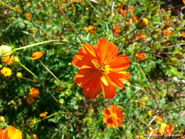 DEIADIETRICH.COM-4on4-laranja4